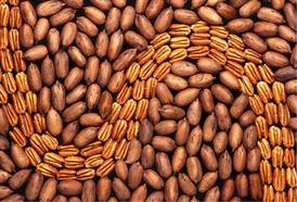 Proč jíst pekanové a para ořechy?