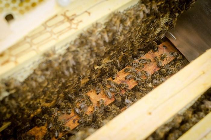 Máváním křídel včely dehydratují nektar