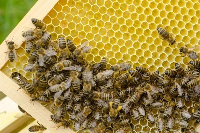 Každá včela má svou úlohu