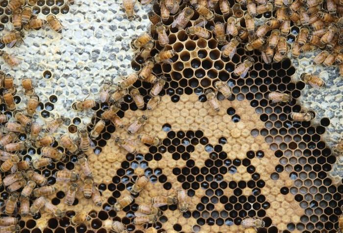 Zázračné účinky medu Manuka
