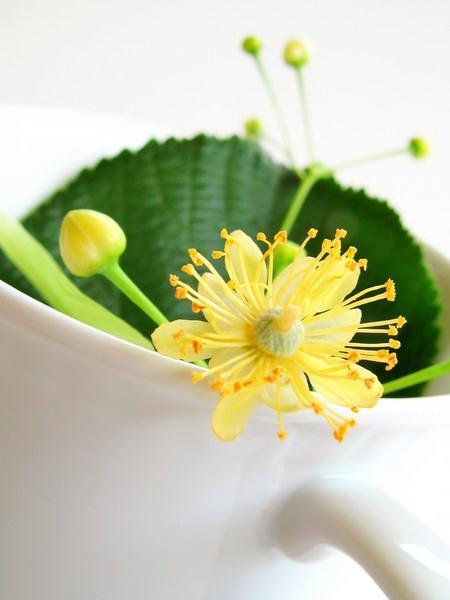 Čaj se připravuje ze sušených lipových květů