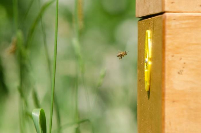 V úlu je teplota okolo 35°C