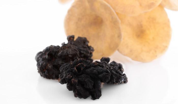 Medicinální houba Chaga