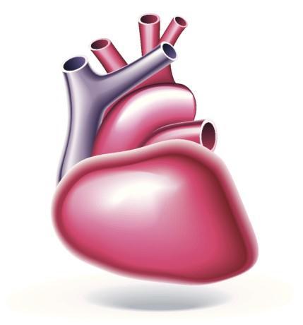 Lidske srdce